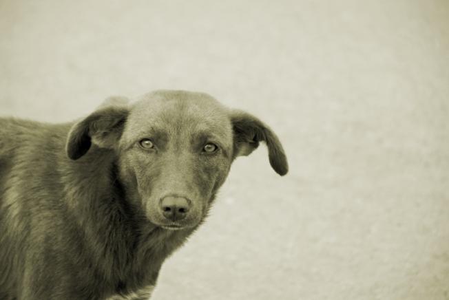 4091123-homeless-dog